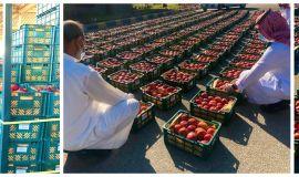 امانة الشرقية ظبط طنين من فاكهة التفاح في سوق الخضار والفواكه  بالدمام ظهرت عليها علامات التلف قبل توزيعها
