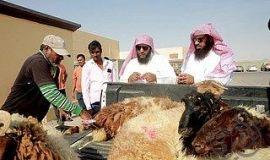 """18 ألف مذبوحات الاحساء حتى ثاني أيام """" الاضحى """""""